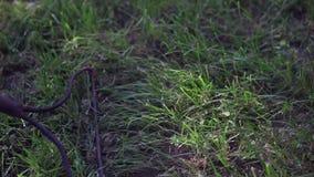Τσουγκράνα φιλμ μικρού μήκους
