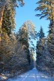 Τυλιγμένη χιόνι χιονοθύελλα δέντρων μετά από πέρα από τον επίγειο δρόμο Στοκ φωτογραφία με δικαίωμα ελεύθερης χρήσης