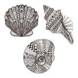 Τυποποιημένα καθορισμένα θαλασσινά κοχύλια Zentangle Συρμένη χέρι διανυσματική απεικόνιση Στοκ φωτογραφίες με δικαίωμα ελεύθερης χρήσης