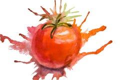 τυποποιημένη ντομάτα απεικόνισης απεικόνιση αποθεμάτων