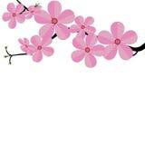 Τυποποιημένος κλάδος κερασιών της Ιαπωνίας κερασιών με την ανθίζοντας απεικόνιση λουλουδιών Στοκ Εικόνες