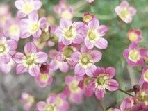Τυποποιημένος στενός επάνω των ρόδινων λουλουδιών διανυσματική απεικόνιση