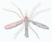 Τυποποιημένο κουνούπι Έντομο με τις διακοσμήσεις γραμμική τέχνη Διανυσματική απεικόνιση ενός κουνουπιού Zentangle Παράσιτο Bloods απεικόνιση αποθεμάτων