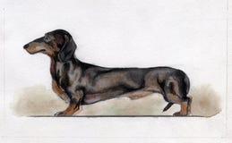 Τυποποιημένο μαύρο dachshund που χρωματίζεται στο watercolor στοκ εικόνες με δικαίωμα ελεύθερης χρήσης