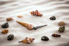 Τυποποιημένο ρολόι πινάκων για τα κοχύλια στην άμμο για τη συγκέντρωση και τη χαλάρωση για την αρμονία και την ισορροπία στην καθ Στοκ φωτογραφίες με δικαίωμα ελεύθερης χρήσης