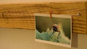 Τυπωμένες εικόνες Στοκ εικόνες με δικαίωμα ελεύθερης χρήσης