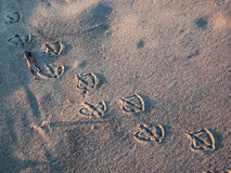 Τυπωμένες ύλες ποδιών γλάρων στην άμμο Στοκ Φωτογραφίες