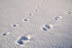 Τυπωμένες ύλες ποδιών ενός ατόμου και ενός σκυλιού στον τομέα χιονιού Στοκ Φωτογραφία