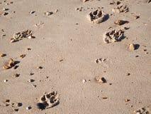 Τυπωμένες ύλες ποδιών σκυλιών Στοκ Εικόνα