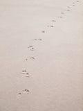 Τυπωμένες ύλες ποδιών στην άμμο Στοκ Φωτογραφία