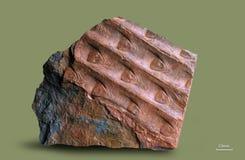 Τυπωμένες ύλες των αρχαίων εγκαταστάσεων Στοκ Φωτογραφίες