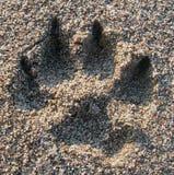 τυπωμένη ύλη σκυλιών στοκ εικόνα με δικαίωμα ελεύθερης χρήσης