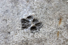 Τυπωμένη ύλη ποδιών γατών ξηρά στο τσιμέντο στο πάτωμα γκαράζ Στοκ εικόνα με δικαίωμα ελεύθερης χρήσης