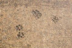 Τυπωμένη ύλη ποδιών σκυλιών στην άσφαλτο Στοκ Εικόνες