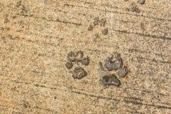 Τυπωμένη ύλη ποδιών σκυλιών στην άσφαλτο Στοκ φωτογραφίες με δικαίωμα ελεύθερης χρήσης