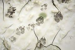 τυπωμένη ύλη ποδιών σκυλιών Στοκ φωτογραφία με δικαίωμα ελεύθερης χρήσης