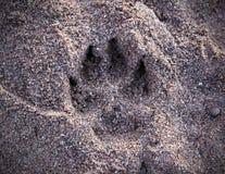 Τυπωμένη ύλη σκυλιών στην άμμο στοκ φωτογραφία