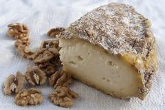 Τυρί και καρύδια Στοκ φωτογραφία με δικαίωμα ελεύθερης χρήσης