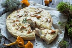 Τυρί και chanterelles πίτα Στοκ Εικόνες