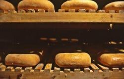 Τυρί Coinga στοκ εικόνες με δικαίωμα ελεύθερης χρήσης