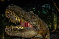 Τυραννόσαυρος Rex, βασιλικό μουσείο του Tyrell, Drumheller, Αλμπέρτα, Καναδάς στοκ εικόνες