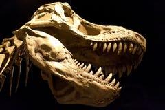 Τυραννόσαυρος Rex Στοκ φωτογραφίες με δικαίωμα ελεύθερης χρήσης