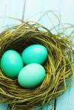 Τυρκουάζ αυγά Πάσχας Στοκ Εικόνες