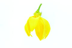 Τυρκουάζ λουλούδια Στοκ Εικόνες