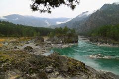 Τυρκουάζ ποταμός Katun το φθινόπωρο σε Altai Στοκ εικόνες με δικαίωμα ελεύθερης χρήσης