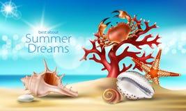 τυρκουάζ υπόβαθρο με τη θερινούς αμμώδη παραλία, τα θαλασσινά κοχύλια, τα χαλίκια, τον αστερία, το καβούρι και το κοράλλι Στοκ Φωτογραφίες