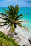 Τυρκουάζ φοίνικας παραλιών Tulum σε Riviera Maya σε των Μάγια Στοκ φωτογραφίες με δικαίωμα ελεύθερης χρήσης