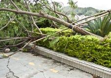 τυφώνας Στοκ φωτογραφίες με δικαίωμα ελεύθερης χρήσης