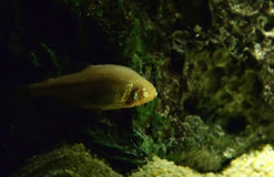 Τυφλά ψάρια στοκ φωτογραφία