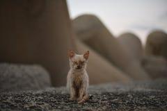 τυφλό γατάκι Στοκ Φωτογραφία