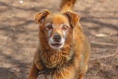 τυφλό σκυλί Στοκ φωτογραφία με δικαίωμα ελεύθερης χρήσης