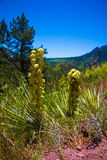 Τυχαία λουλούδια habitate στα βουνά του Κολοράντο Στοκ φωτογραφία με δικαίωμα ελεύθερης χρήσης