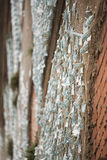 Τυχαίος τοίχος Φλωρεντία Στοκ φωτογραφία με δικαίωμα ελεύθερης χρήσης