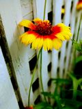 Τυχαίο λουλούδι στο ναυπηγείο Στοκ Φωτογραφίες