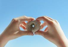 Τυχερές πέτρες πετρών ` με τις φυσικές τρύπες Στοκ εικόνες με δικαίωμα ελεύθερης χρήσης