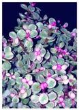 Τυχερές πορφυρές Succulent εγκαταστάσεις - το μωρό μου στοκ εικόνες