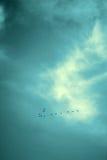Τυχερό αριθ. πουλιά που πετούν στον ουρανό, μαύρο Στοκ φωτογραφία με δικαίωμα ελεύθερης χρήσης