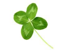 Τυχερό τριφύλλι με τέσσερα φύλλα Στοκ Εικόνα