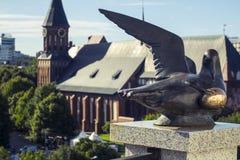 Τυχερό seagull Στοκ Φωτογραφία