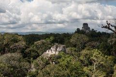 Των Μάγια ναοί και θόλος τροπικών δασών Στοκ Εικόνες