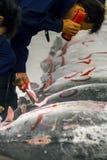Τόνος για τη δημοπρασία στην αγορά ψαριών Tsukiji Στοκ εικόνες με δικαίωμα ελεύθερης χρήσης