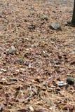 Τόσο πολύς καφετιά φύλλα στο έδαφος Στοκ φωτογραφία με δικαίωμα ελεύθερης χρήσης