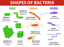 Τύποι βακτηριδίων Στοκ Εικόνα
