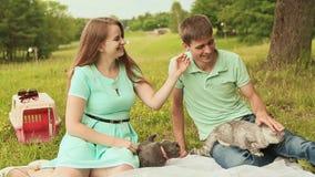 Τύπος και κορίτσι σε ένα λιβάδι με τις σκωτσέζικες πτυχές και τις γκρίζες βρετανικές γάτες απόθεμα βίντεο