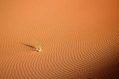 Τύρφη χλόης στον αμμόλοφο Στοκ Εικόνες