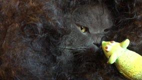 Τύλιξε τα φιλιά γατών το πράσινο ποντίκι φιλμ μικρού μήκους
